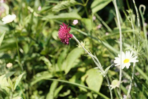 Weidebloemen in het gras   Natuurfotografie