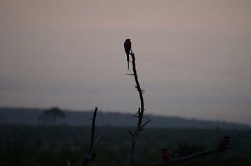 Vroege Vogels van Minca de Jong
