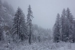 Sprookjesachtig winterwonderland