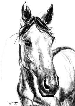 Britt das Pferd von Go van Kampen