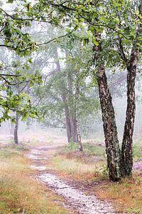 Mistig bos op de Veluwe - deel 2