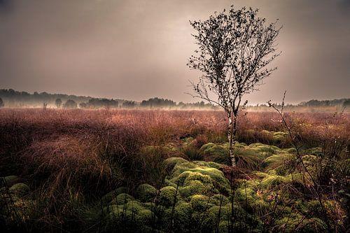 Haaksbergerveen mistige landschap van Martijn van Steenbergen