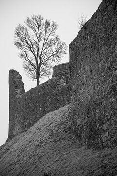 Boom op een kasteelmuur