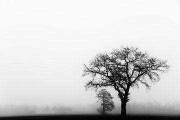 Eenzame boom in de mist van Francis Dost