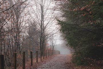Nebliger Morgen in Rhenen von Tania Perneel