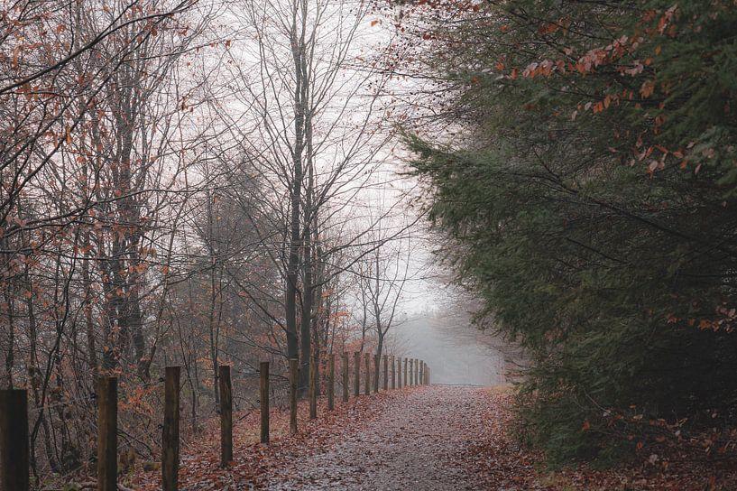 mistige morgen in Rhenen van Tania Perneel
