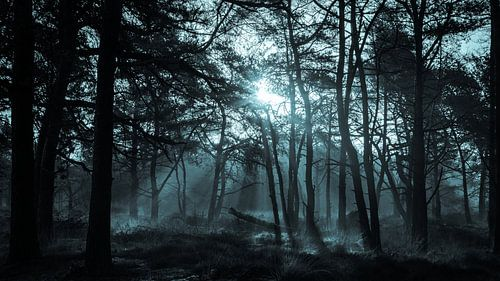 Lichtstralen door het bos in de vroege ochtend von Tom Holmes