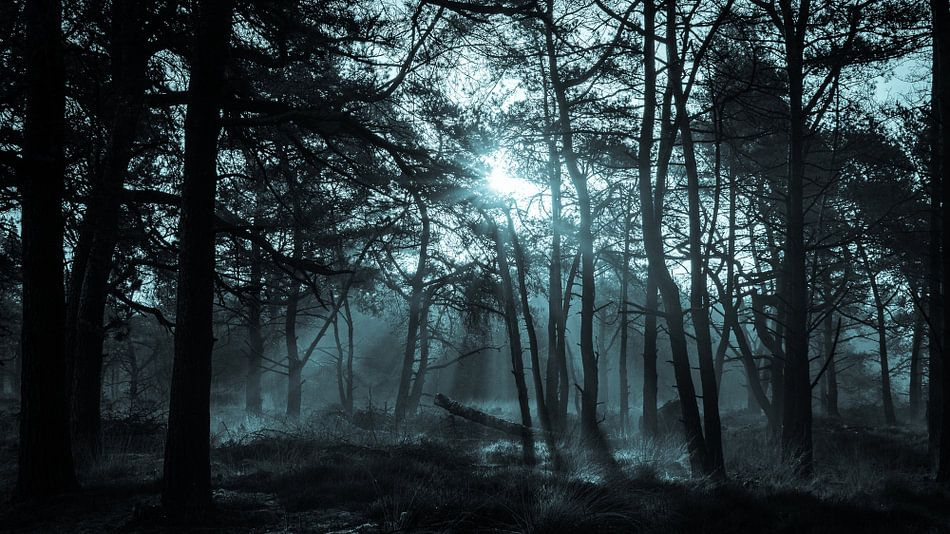 Lichtstralen door het bos in de vroege ochtend