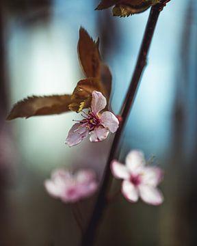 Blüte von Pim Haring