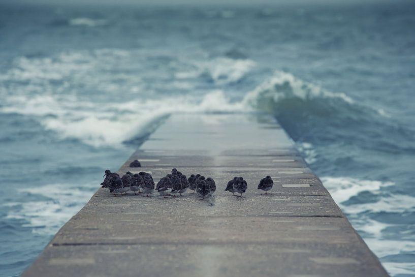 Wellenbrecher von BVpix