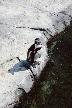 Pinguïn op klif von Carmen van Dijken