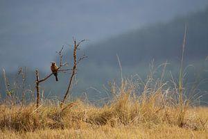 Bijeneter Zuid Afrika
