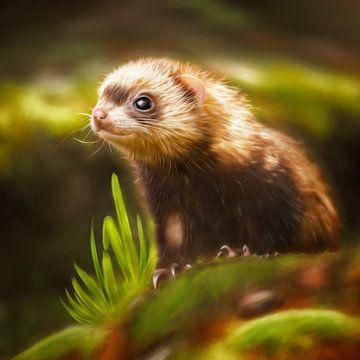 Sweet ferret sur Silvio Schoisswohl