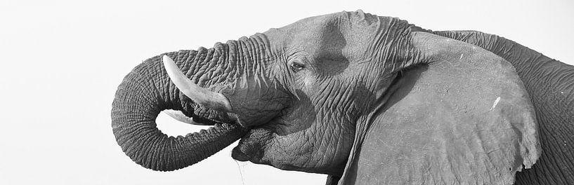 Drinkende olifant en profiel van Ellen van Schravendijk