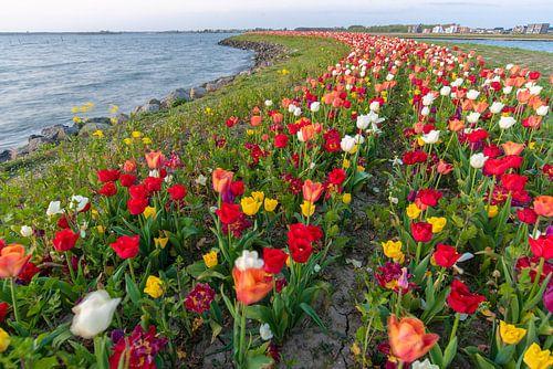 tulpen op een eiland in Zeewolde Flevoland.