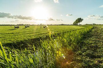 Typische holländische Polderlandschaft mit weidenden Kühen von Dennis Kuzee