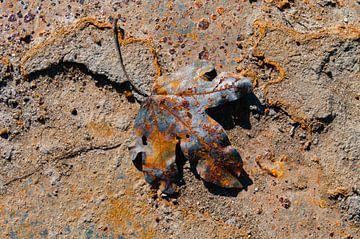 Rusty leaf II van LYSVIK PHOTOS