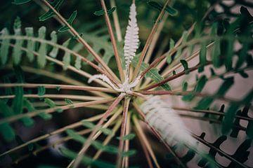Nahaufnahme einer botanischen Pflanze von Sabine Keijzer