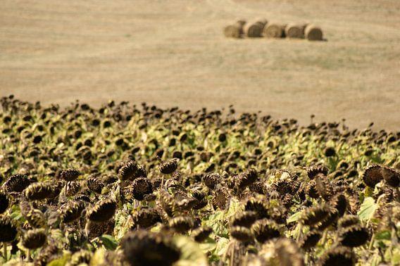 Toscane - Sunflowers and Haystacks van Jeroen van Deel