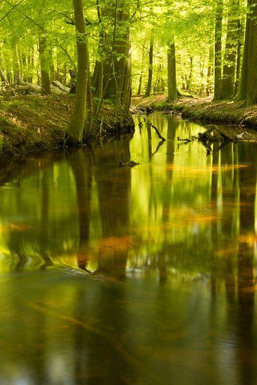 de beek van hanny bosveld