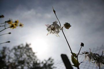 bloem van Claas-Jan Jager
