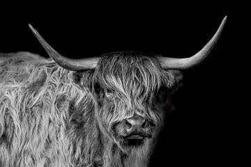 Schottischer Highlander, Portrait in schwarz-weiß von Gert Hilbink