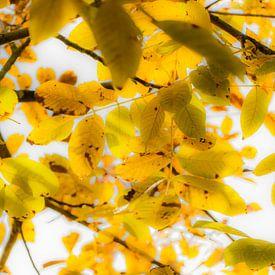 Leaves van Maja Ooms
