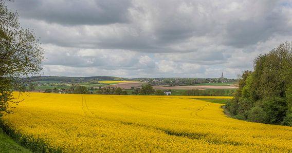 Koolzaadvelden bij Mamelis in Zuid-Limburg