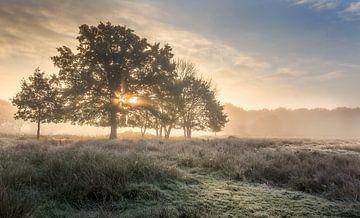 Aufgehende Sonne hinter Baum Wijffelterbroek in der Nähe der Vosseven
