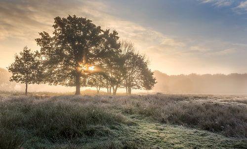 Stralende opkomende zon achter boom  Wijffelterbroek bij het Vosseven