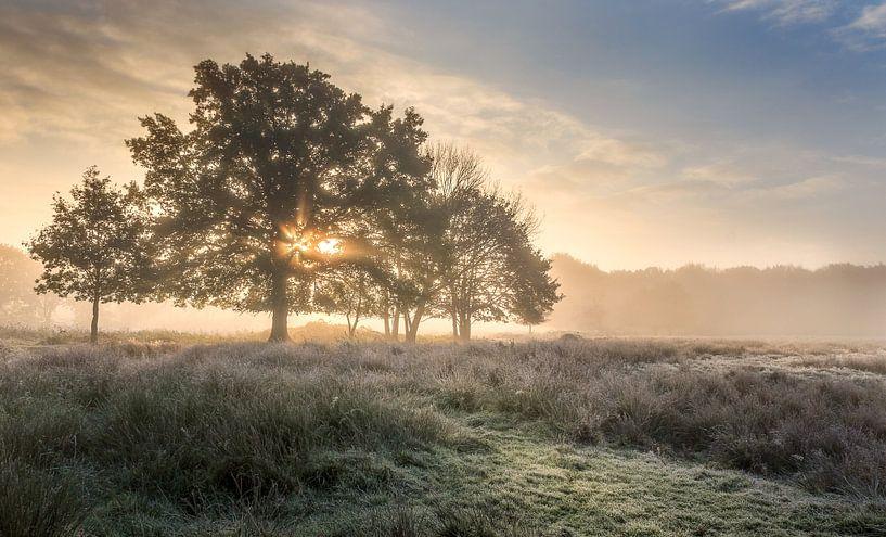 Stralende opkomende zon achter boom  Wijffelterbroek bij het Vosseven van Peschen Photography