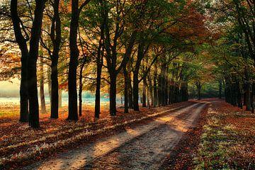 Baumallee Veluwe mit Herbst von Tim Annink