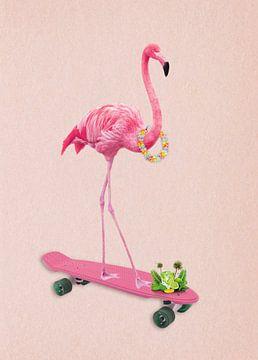 Flamingo service van Rudy en Gisela Schlechter