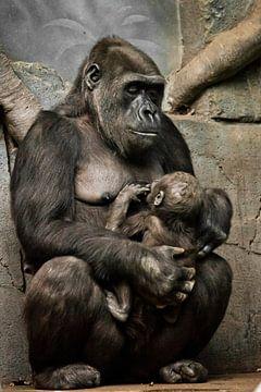 Gorilla aap moeder (of haar zus) verpleegt haar kleine baby, schattig tafereel van Michael Semenov