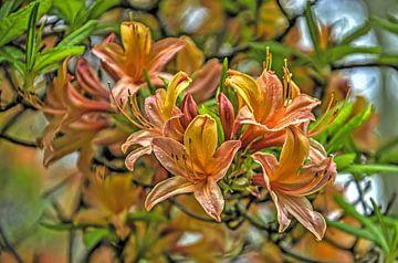 Oranje rhododendron van Frans Blok