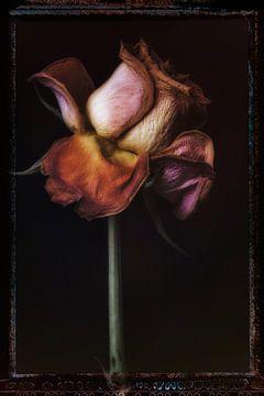 Alte Blumen 14 von Henk Leijen
