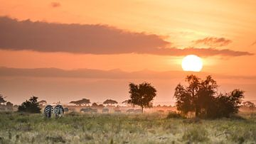 Kenia | Weiße-Berg-Bewegung 2 von Mariëlle de Valk