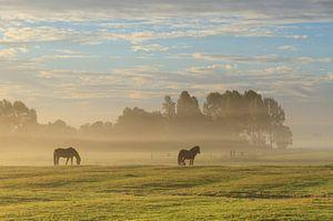 Paarden in de mist. van