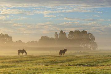 Paarden in de mist. sur