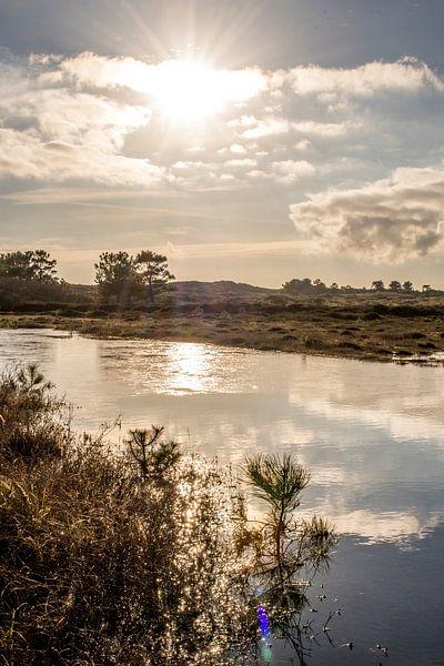 Oude Kooi Vlieland van Natasja Claessens