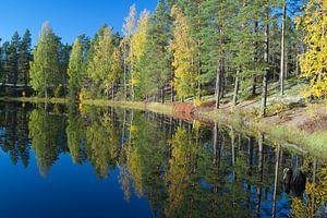 In het herfst bos in  Dalarna, Zweden