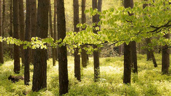 Bos van Maja Ooms