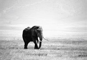 olifant in de Ngorogoro krater van