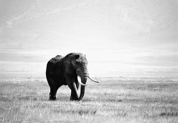 olifant in de Ngorogoro krater von Jorien Melsen Loos