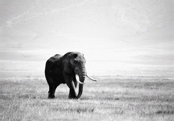 olifant in de Ngorogoro krater