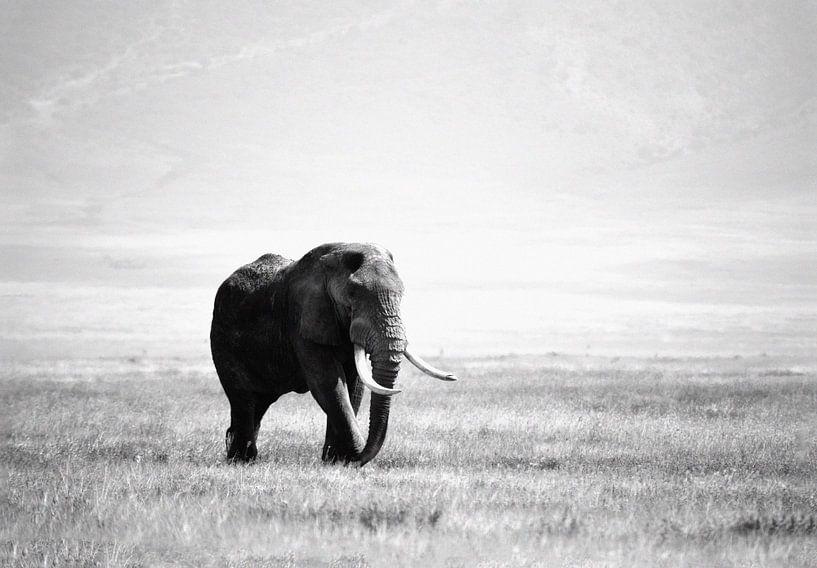 olifant in de Ngorogoro krater van Jorien Melsen Loos