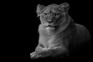 leeuw van Jiske Wijmans @Artistieke Fotografie