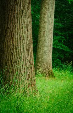 Statige boslaan in nederland van Michel Knikker