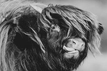 Schotse Hooglander met uitgestoken tong (Zwart-Wit) van Latifa - Natuurfotografie