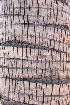 Palm, Palme, Paume van Yvonne de Waal Malefijt